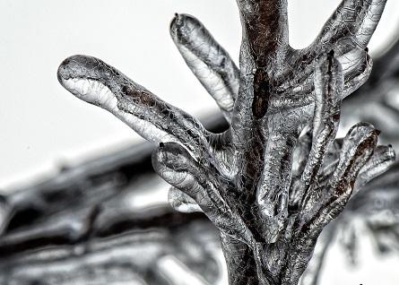 tree-freeze-ice-winter-50990-large