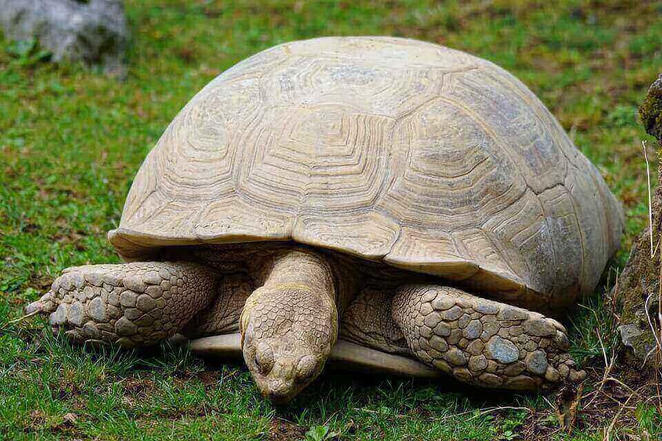 turtle-871285_960_720