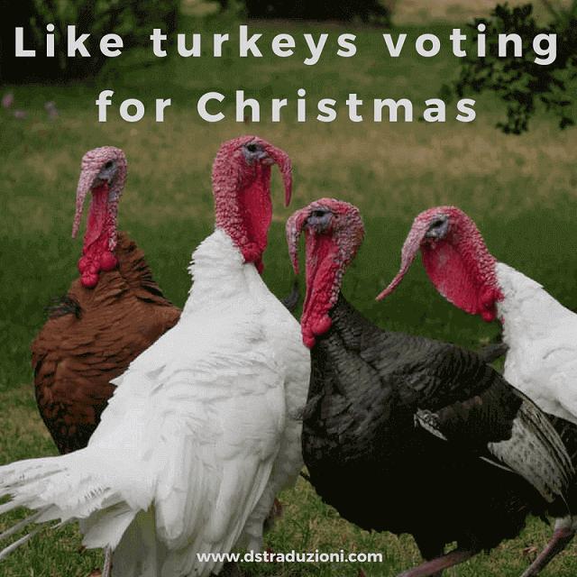 turkeys-voting-for-chrismas