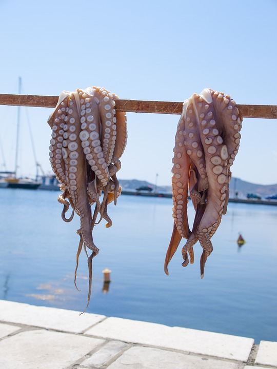 octopus-2276595_960_720