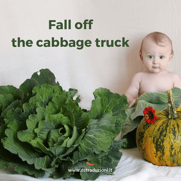 Fall of the cabbage truck