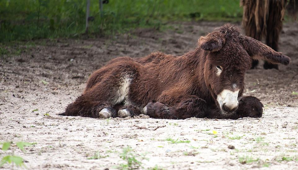 donkey-2651719_960_720